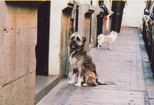 Los perros que esperan
